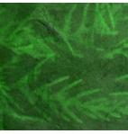 Verde Zoom